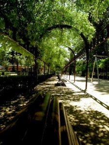 corredor de uma praça com bancos sombreados pelas árvores